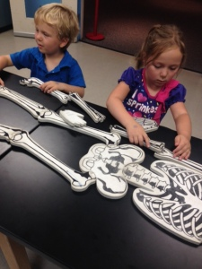 Checking out bones at OMSI.